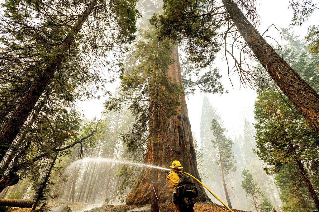 Thousands Fight Wildfires Threatening CA's Sequoias